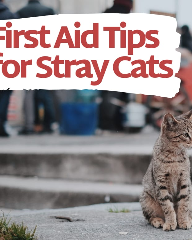 how-to-treat-a-stray-cats-wound