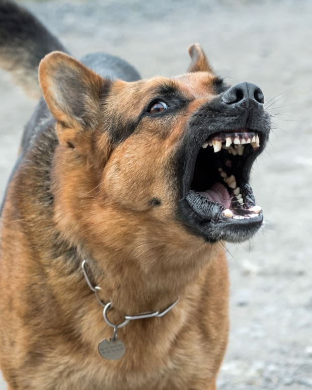 warning-signs-of-potentially-dangerous-and-aggressive-dogs