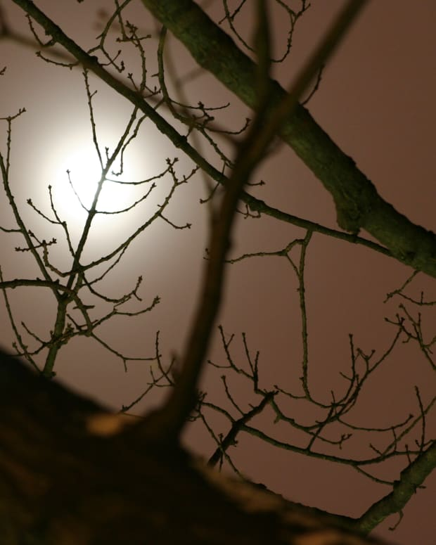 December Moon through Tree Branches, by Edward S. Gault