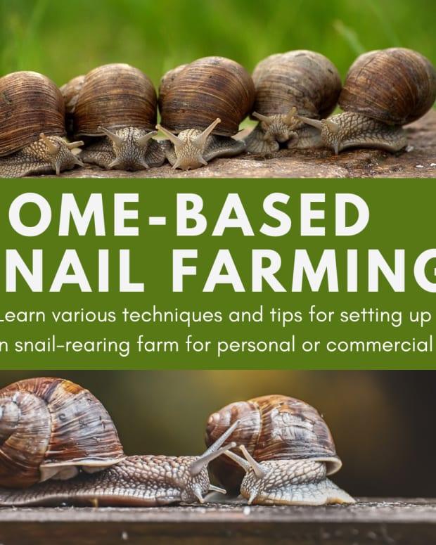 home-based-snail-farming
