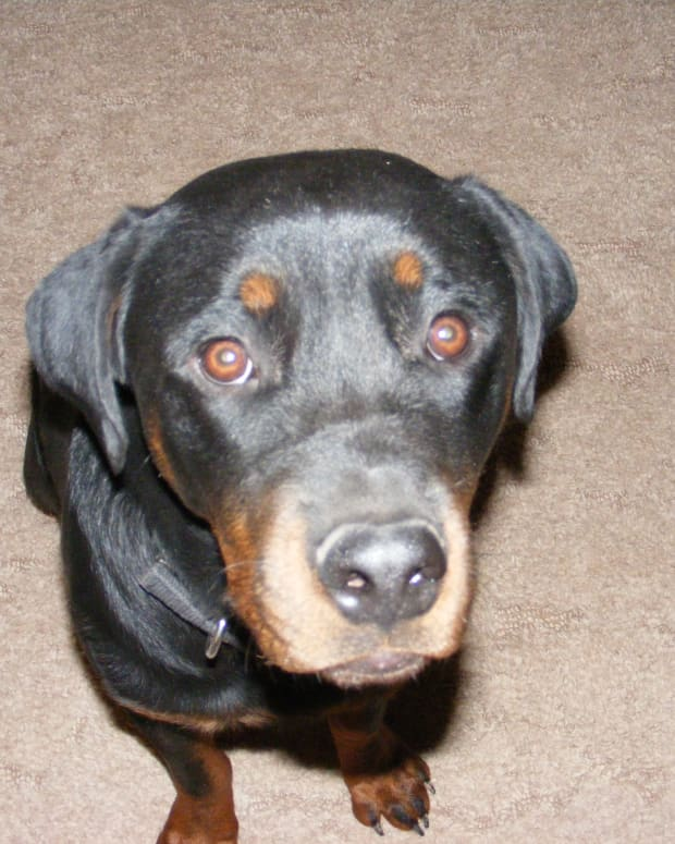 dog-training-recognizing-different-drives