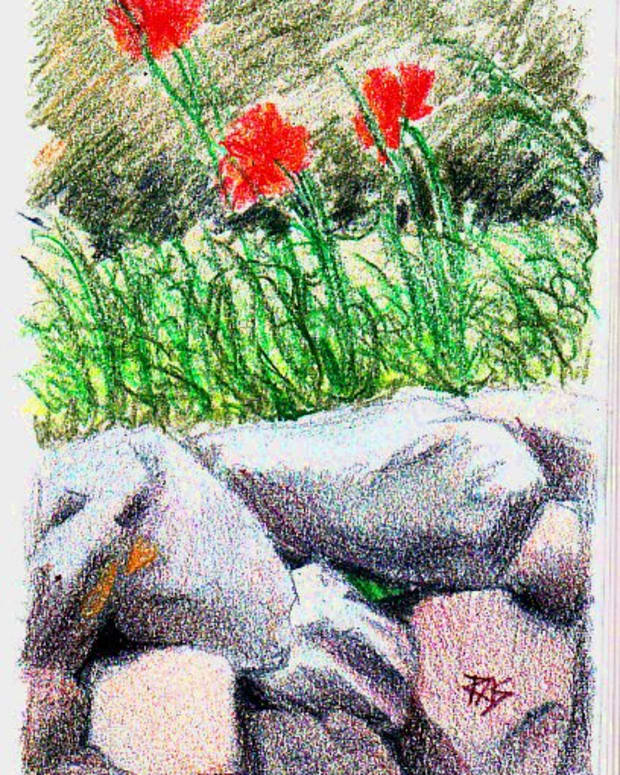 Cape Cod Poppies, drawn in Derwent AquaTone woodless watercolor pencils on paper, dry, by Robert A. Sloan. Photo reference from WetCanvas.com August Colored Pencils Challenge posted by draymond for the August 2009 Colored Pencil Challenge.