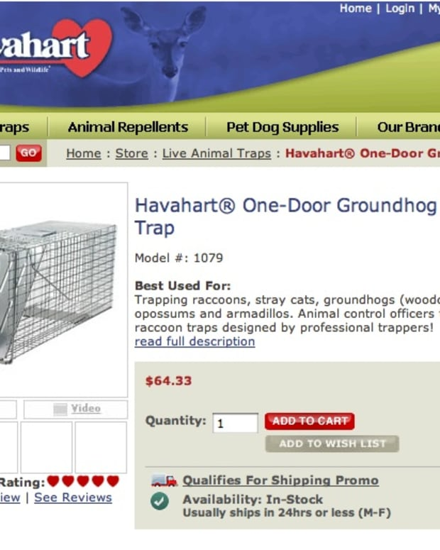 Haveaheart traps are available at hardware stores and online