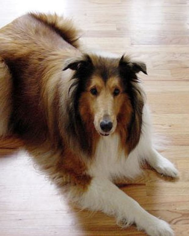 Dogs in your home could mean damaged and scratched flooring.  What is the best solution for flooring when you have dogs?