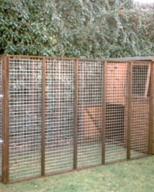 what-size-dog-kennel-and-run-for-your-dog