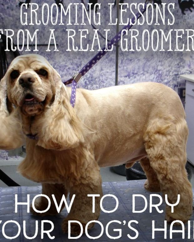 grooming-lessons-from-a-real-groomer-lesson-7-how-to-dry-your-pet