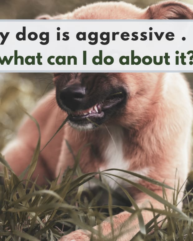 how-to-prevent-or-reduce-territorial-aggression-in-dogs