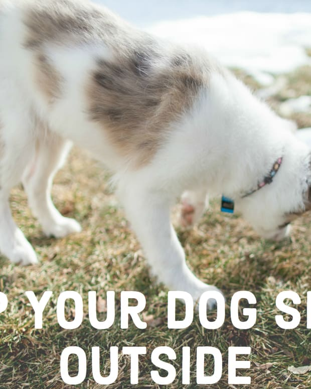 how-to-get-your-dogs-to-sleep-outside