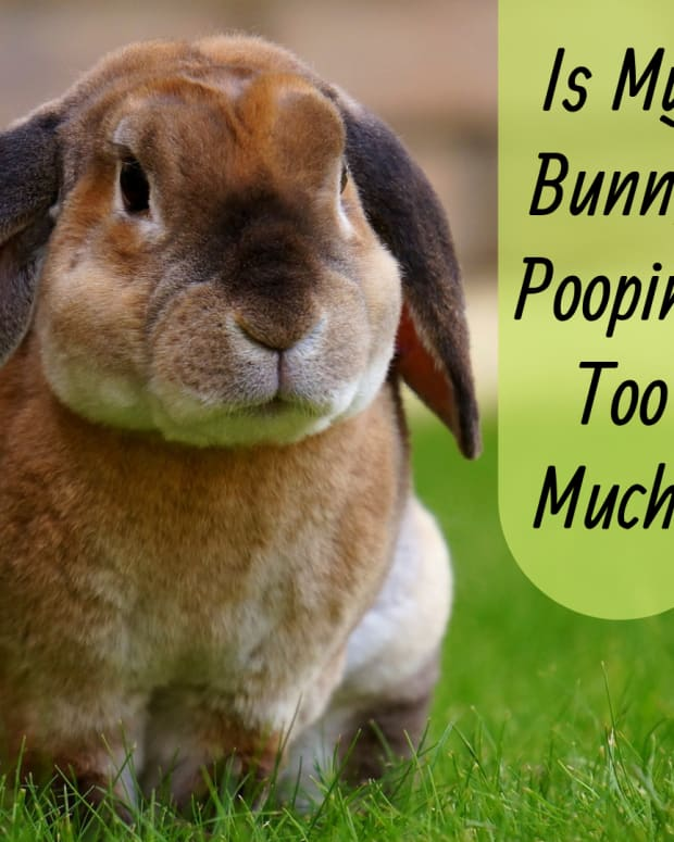 why-does-my-bunny-poop-so-much
