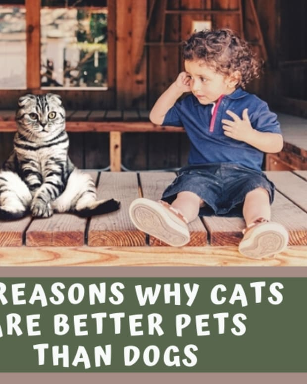why-cats-are-better-than-dogs