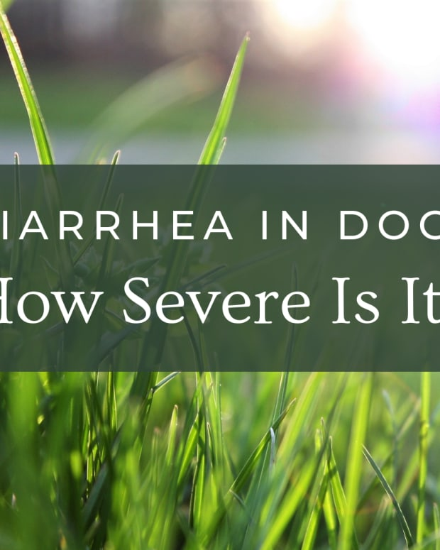 how-to-stop-diarrhea-in-dogs