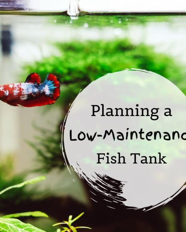 tips-for-a-low-maintenance-aquarium