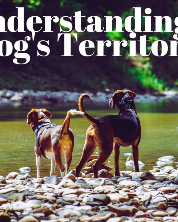 understanding-dog-territorial-marking