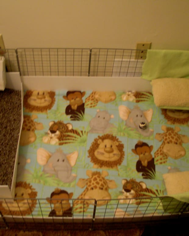 this is my 2x4 C&C cage. If you want to learn how to use fleece, or how to make the bunkbeds, check out my other hubs!