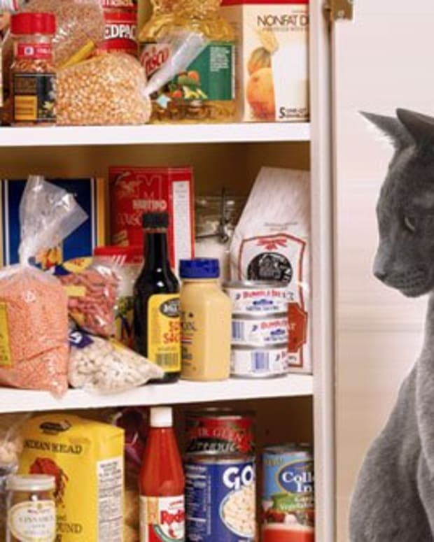 foods-to-avoid-cats