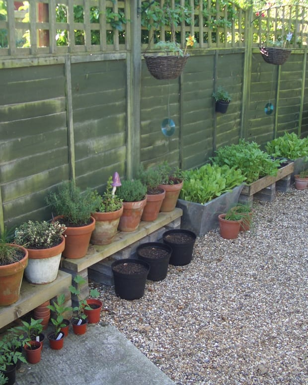 know-the-basics-of-growing-vegetables-in-pots