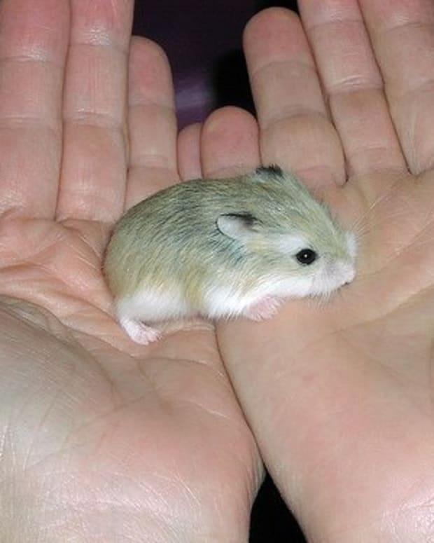 handle-hamster
