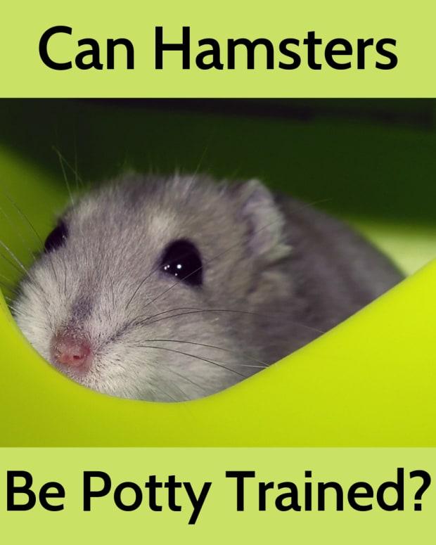 potty-train-a-hamster