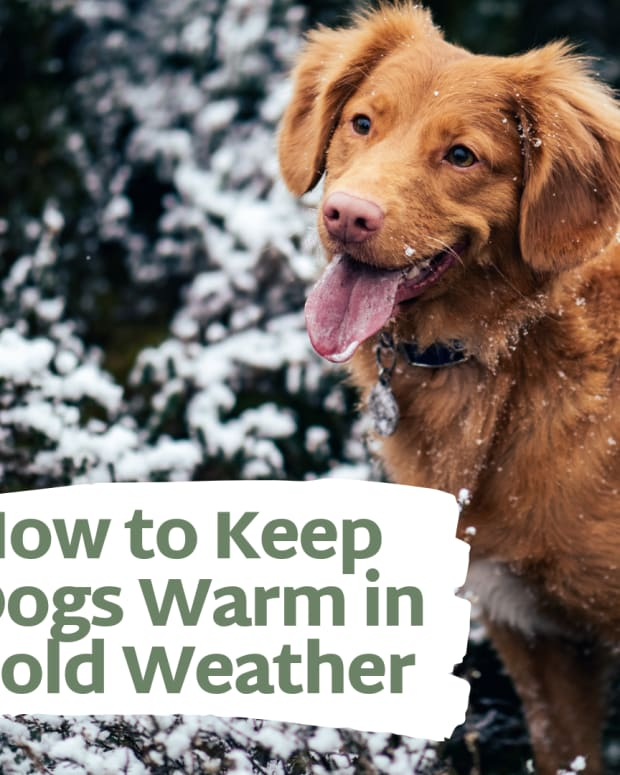 how-to-keep-your-dog-warm-in-winter