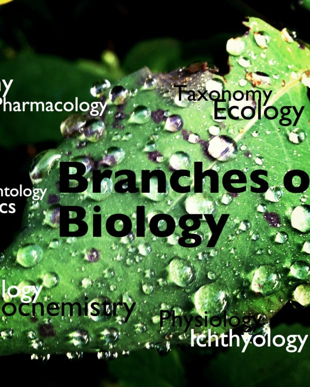 branches-of-biology-and-its-meaning