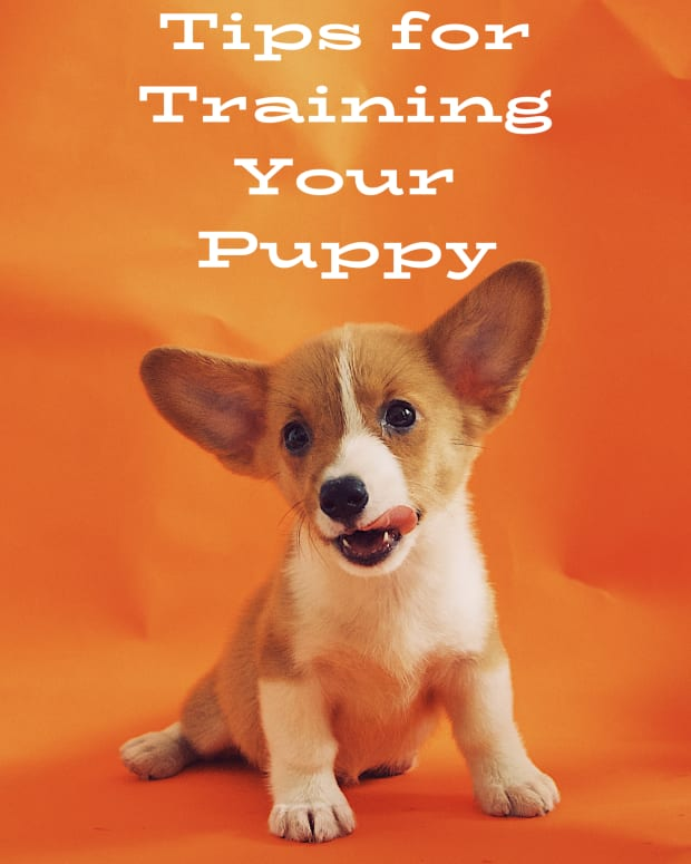 puppy-training-tips-for-first-time-puppy-owners