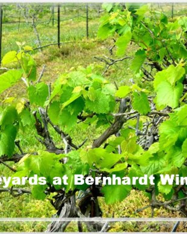 texas-bluebonnet-wine-trail-bernhardt-winery