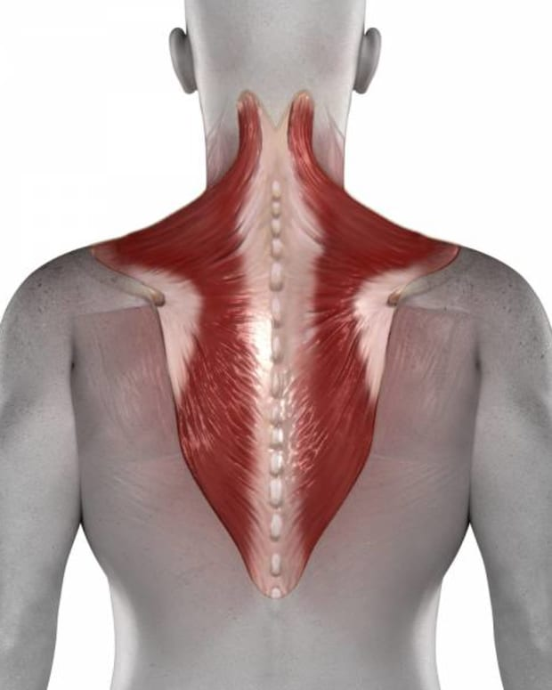 how-to-build-big-trapezius-muscles