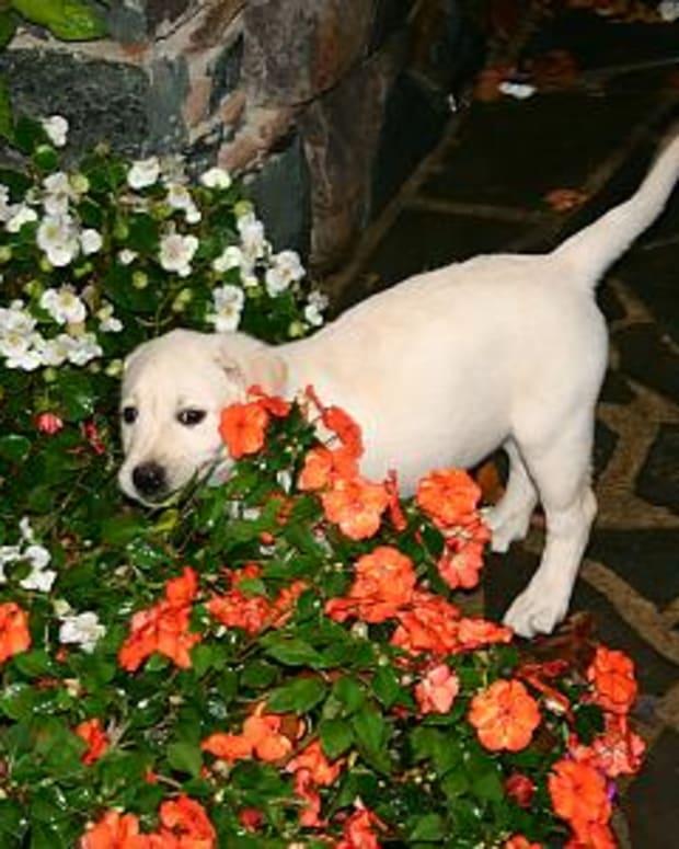 dog-friendly-garden