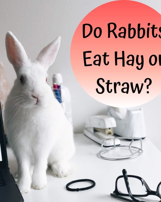 do-rabbits-need-straw-or-hay