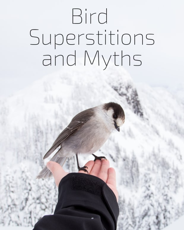 birds-myths-superstitions-about-birds