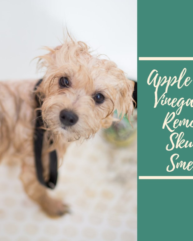 apple-cider-vinegar-to-remove-skunk-smells