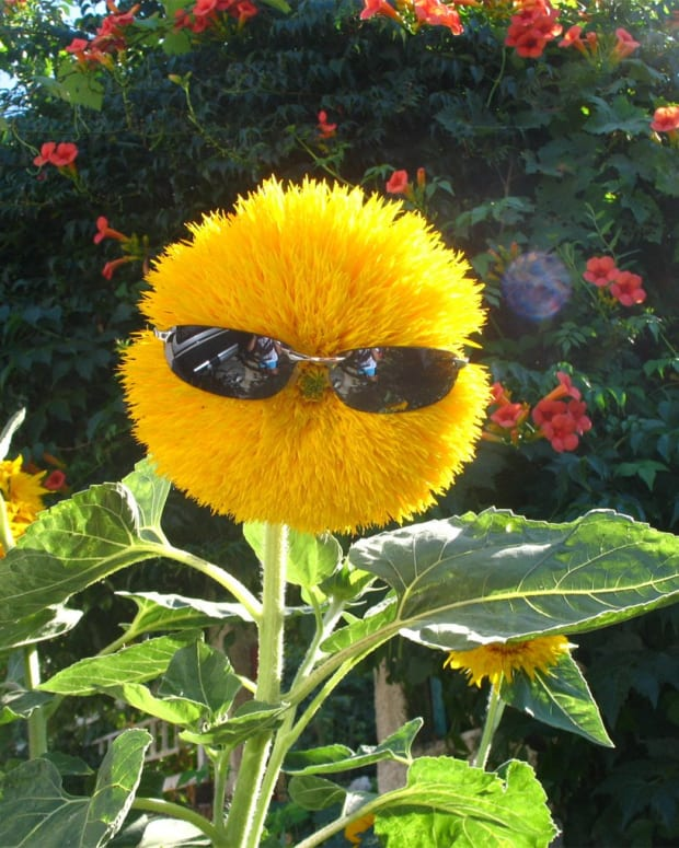 funny-flower-quotes