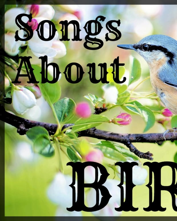 songs-about-birds