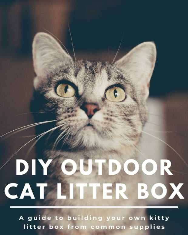 -how-to-build-an-outdoor-litter-box