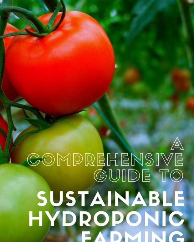 sustainable_farming_types_of_hydroponic_systems