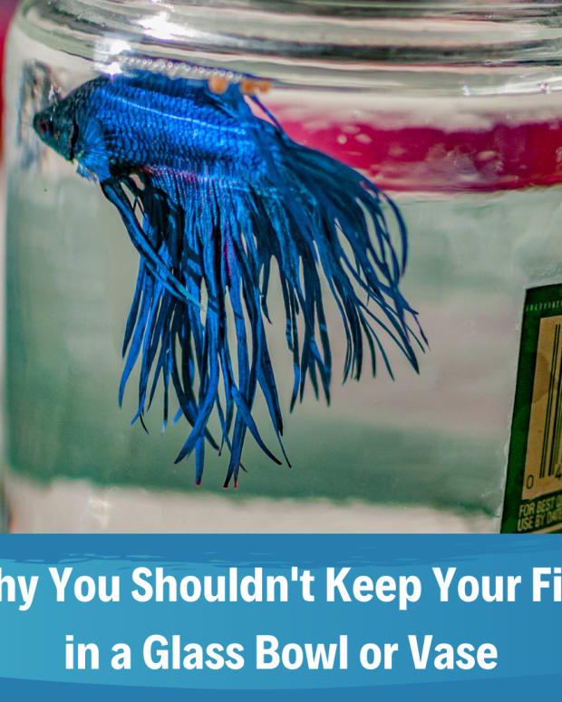 why-fish-bowls-are-bad-for-your-fish