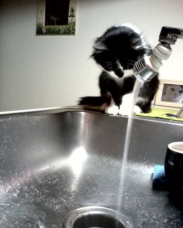 why-cats-drink-from-the-faucet-we-may-never-know