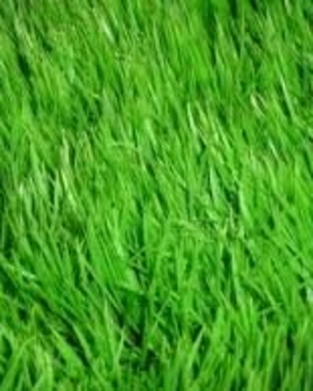 Grass problems can very quickly transform a beautiful lawn like this into an unsightly mess.