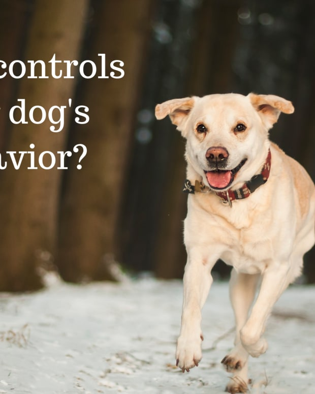 factors-known-to-influence-a-dogs-behavior