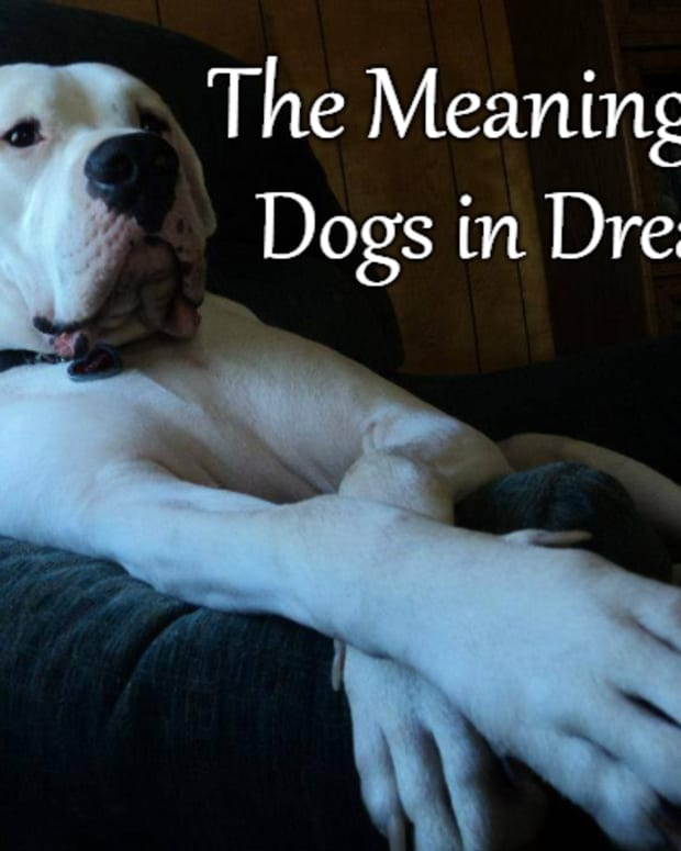 dogs-in-a-dream-interpreting-the-dog-as-a-dream-symbol