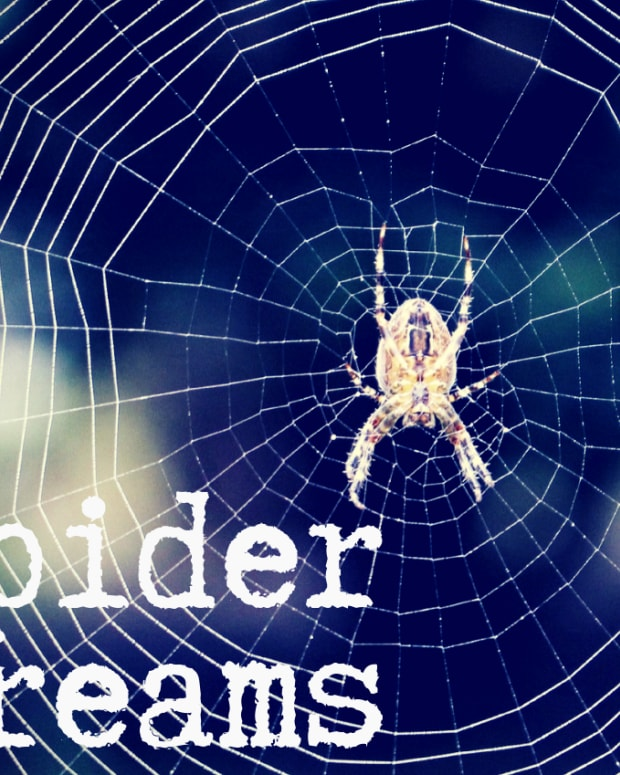 spiders-in-a-dream-interpreting-spiders-as-dreams-symbols