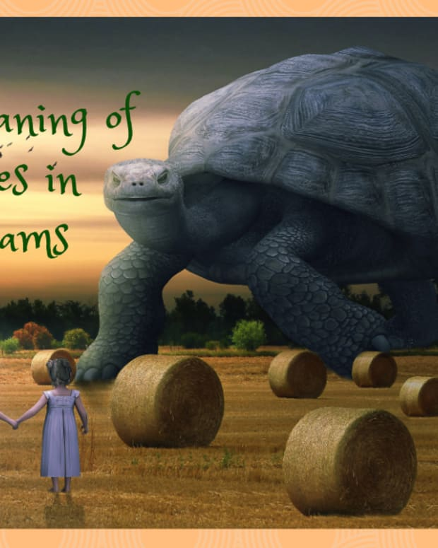 the-meaning-of-dreams-about-turtles