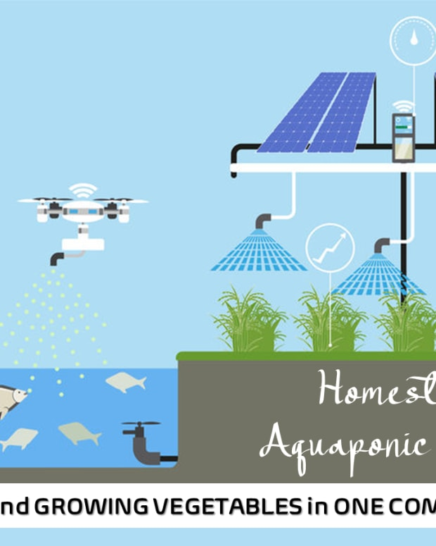 homestead-aquaponic-farming