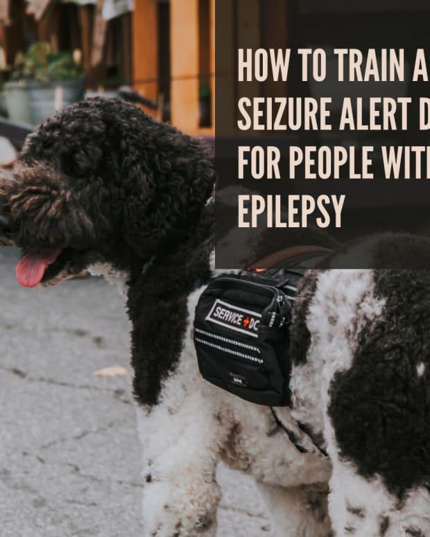 seizure-alert-dogs-for-under-10-000-bucks