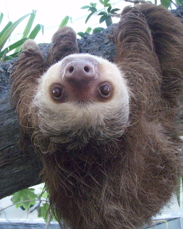 sloth-saves-the-day
