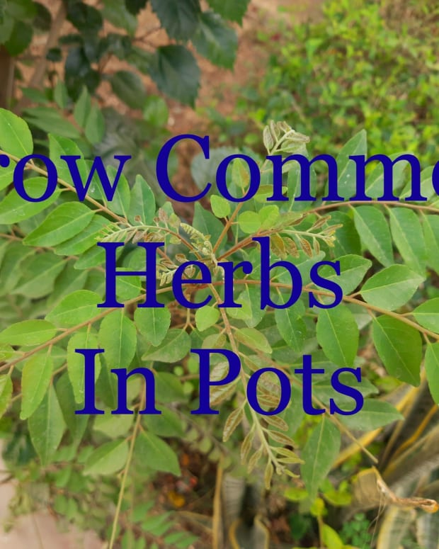7-essential-edible-herbs-to-grow-in-pots-in-small-spaces