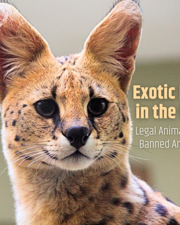 where-are-exotic-pets-legal