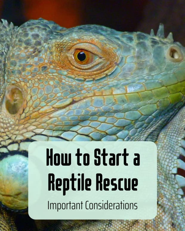 so-you-want-to-start-a-reptile-rescue