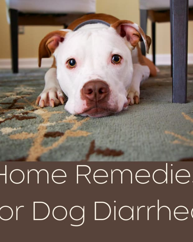 home-remedies-for-dog-diarrhea