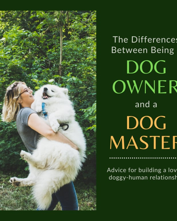the-differences-between-a-dog-owner-and-a-dogs-master